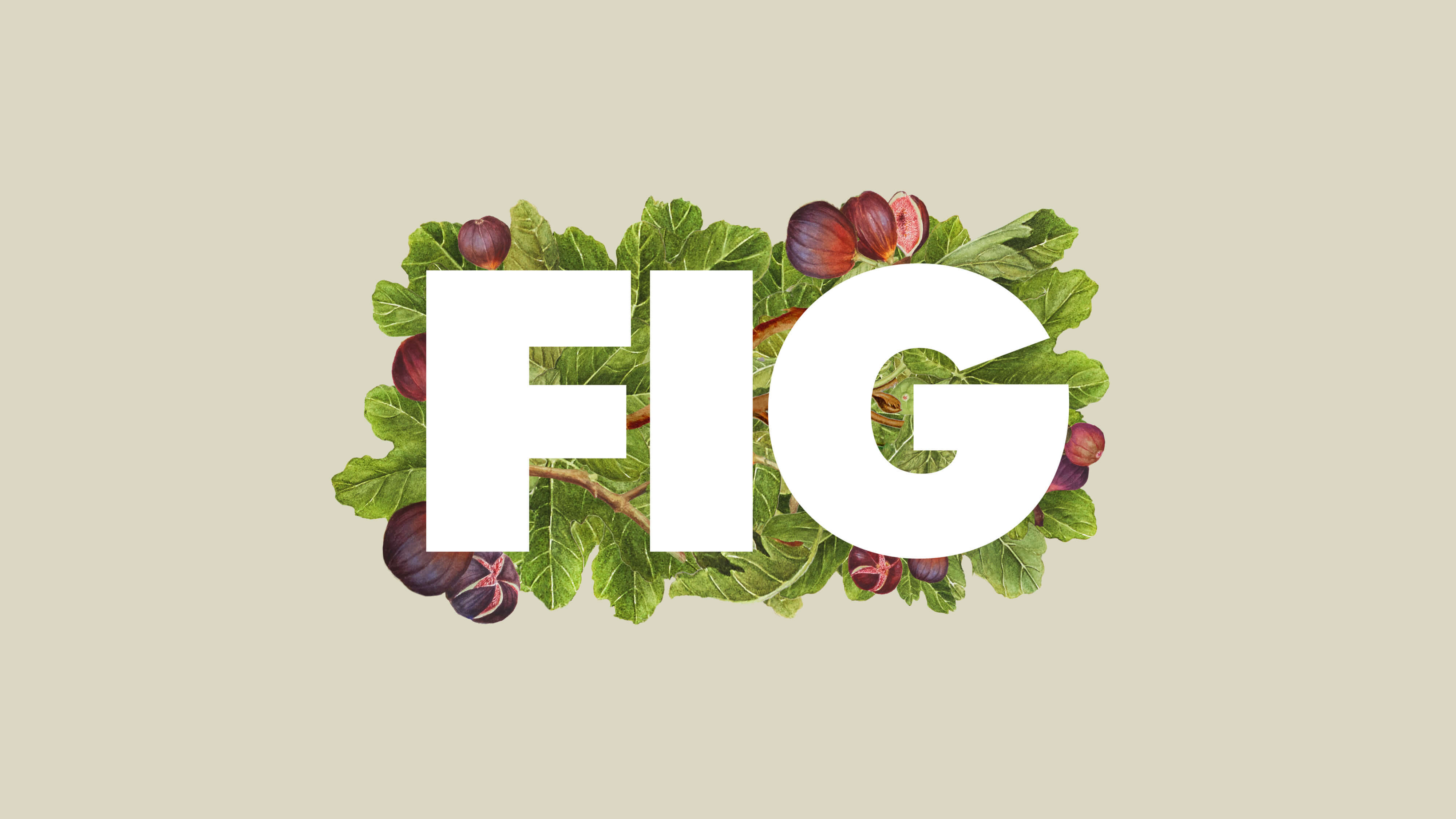 Fig insta9